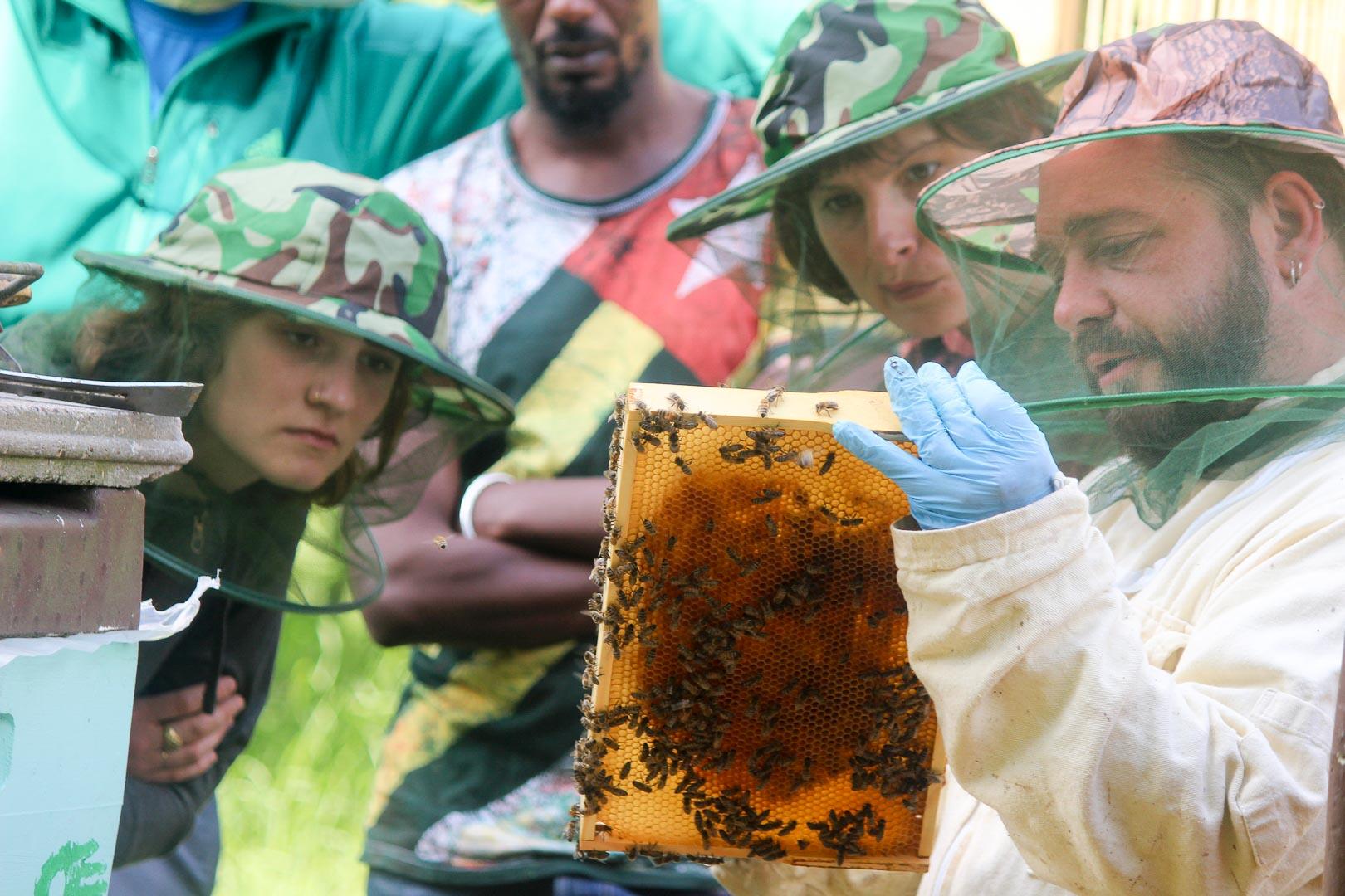 Honigernte in der Gärtnerei